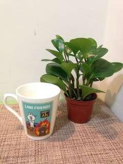 🚚 咖啡杯 馬克杯 陶瓷杯