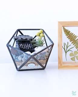 Aerium: Nostalgia Alley with air plant and typewriter ornament