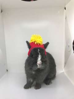 Handmade knitted beanies for bunnies, guinea pigs and other animals!