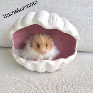 Syrian Hamster Clam Shell Ceramic Hideout House Toy