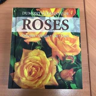 Rose 🌹