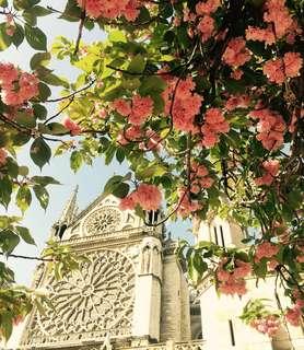 🚚 Bonjour Paris 巴黎聖母院 回到原點 舊地重遊