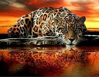 5d 15x20 full Rhinestones cross stitch leopard