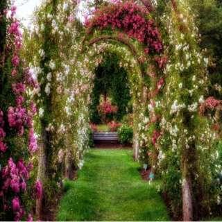 Floral Garden Arch Photobooth Printed Vinyl Backdrop