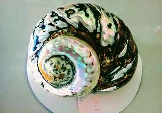 🚚 珍珠螺貝殼