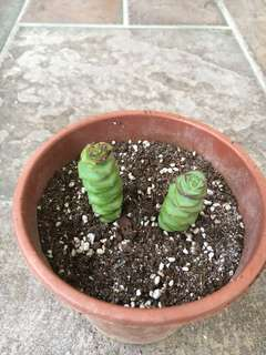 Cheap sale! Succulents