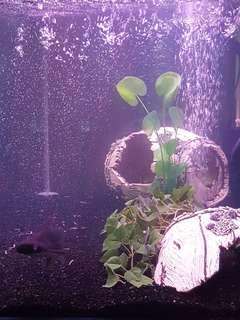 3ft Fish Tank Full Set