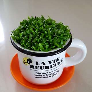 Pre Order Happy Plant For Office & Gift!