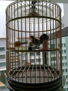 """11"""" cage suitable for Robin puteh finch canary"""