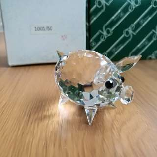 澳洲水晶豬仔