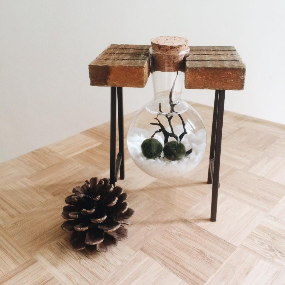 Marimo Moss Ball Terrarium Diy Set Gardening On Carousell