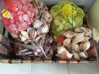 Preloved seashells