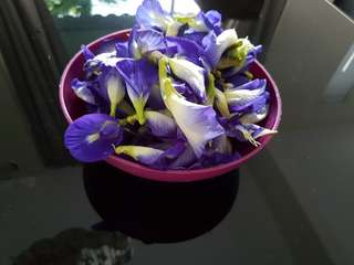 Fresh organic blue pea