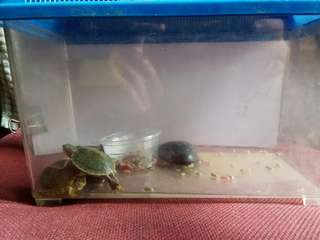 Mini Tank for Tortoise/Fishes/Hamsters