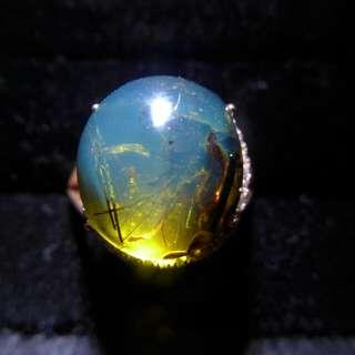 緬甸高淨度金藍蟲珀鑲s925銀活口介指13.5*11.9*8mm厚,約重3g$450