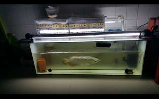 3x1x1 fish tank with accessories