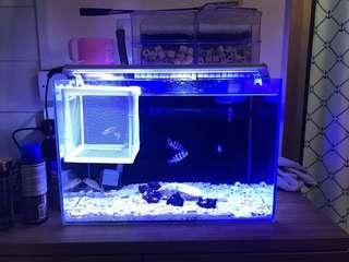 超白魚缸連燈頂濾