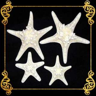Seashell - Philippine Starfish (Bukol) - Bleached - Horned  or Chocolate Chip Sea Star - Protoreaster Nodosus