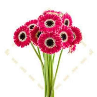 Single stalk flowers