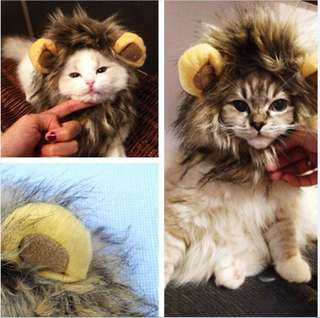 [Pre-Order] Cat wig lion mane costume pet cosplay