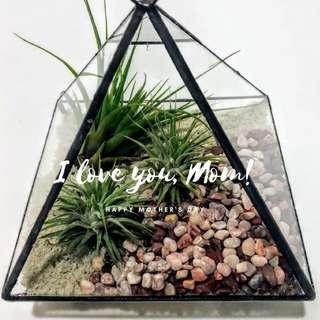DIY Terrarium Kit Mother's Day Special