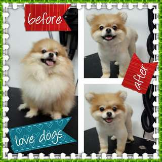 Pet grooming home service