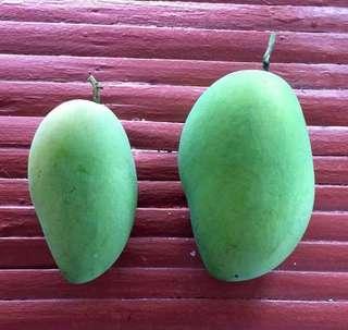 Carabao mangoes