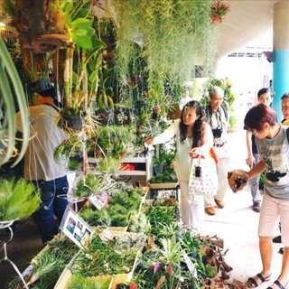 😍VISIT US! Gorgeous Plants, Succulents and Marimo Ball Lightbulbs @ ARTBOX2018, BOOTH 291, Beside MBS (25th - 27th May. 3pm - 11pm)