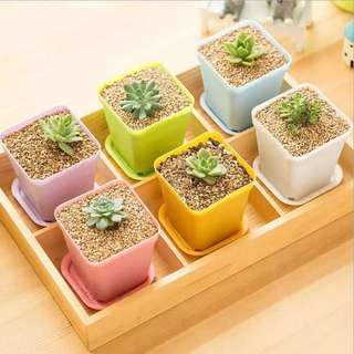 [READY STOCK!] Mini Square Plastic Flower Pot with Tray