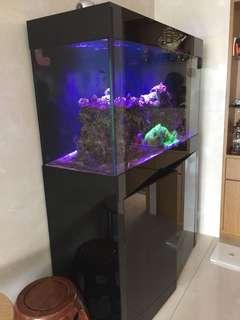 魚缸及過濾器,連珊瑚及魚