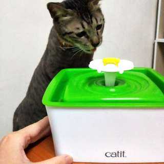 日本 Catie 2.0(寵物小花活水機)