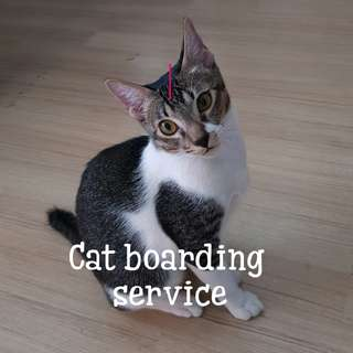 😻😻Cat boarding and cat sitting services with web cam😻😻