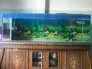 Jual ikan arwarna + aquarium