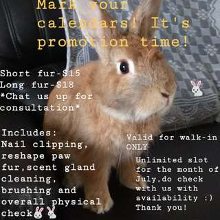 💗[PROMOTION] July Rabbit Grooming💗