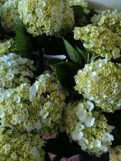 Bunga potong segar