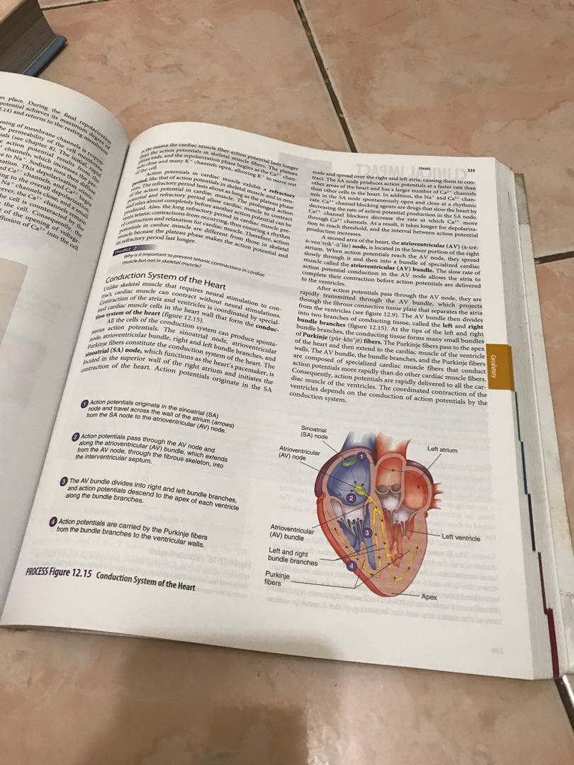 Atemberaubend Seeley Anatomy And Physiology Fotos - Physiologie Von ...