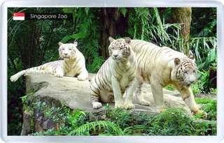 Singapore Zoo ❤️