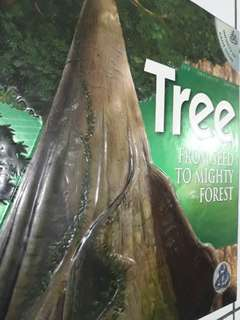 """Buku Anak Import """"Tree From Seed To Mighty Forest"""""""