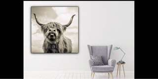 Highland cow canvas print framed