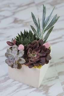 Succulent Garden - Joyous Garden
