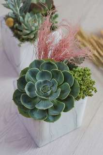 Succulent Arrangement - Jubilant Garden