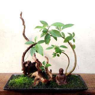 Zen  Bonsai  -  Nirvana  Series  1028