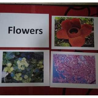 Flowers - BN Flashcards