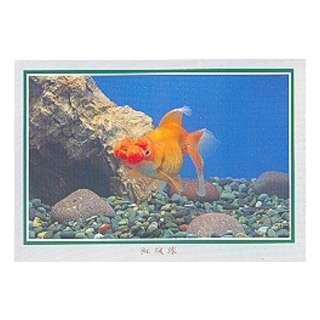 GDF-18-香港明信片-金魚-紅絨球-新穎,尺寸-16.2X11.4CM