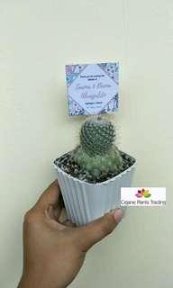 Cactus and succulents souvenirs