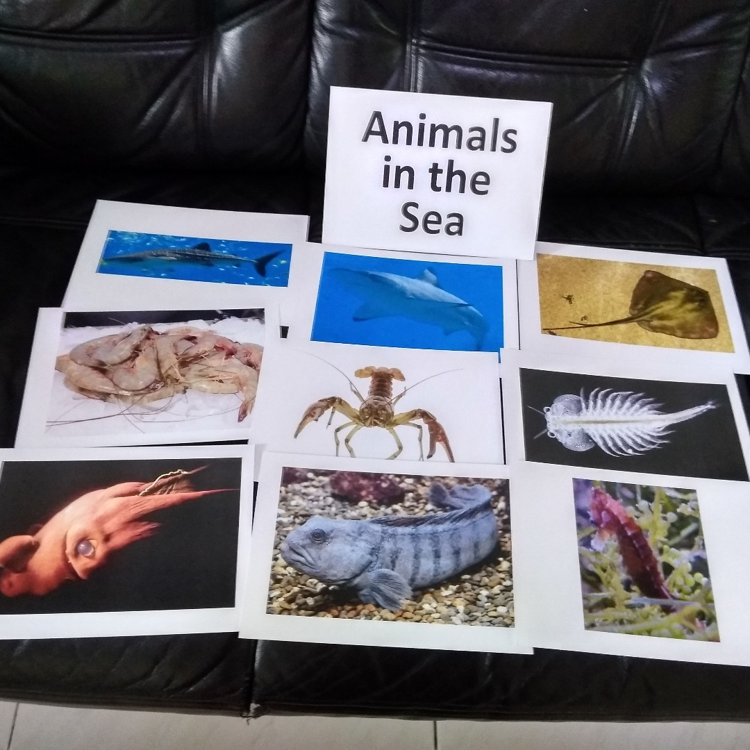 Animals In The Sea Bn Flashcards Babies Kids Nursing Feeding Giant Flashcard Photo