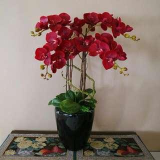 Artificial Waxcoated Premium Phalaenopsis Orchid  (4 Stalks)