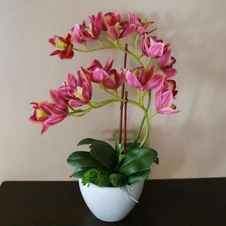 Artificial Waxcoated Premium Cymbidium Orchid  (2 Stalks)