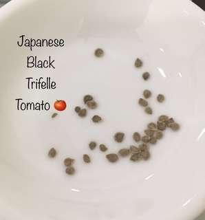 Japanese Black Trifle Tomato 🍅