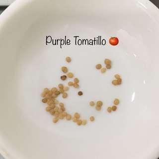 Purple Tomatillo 🍅